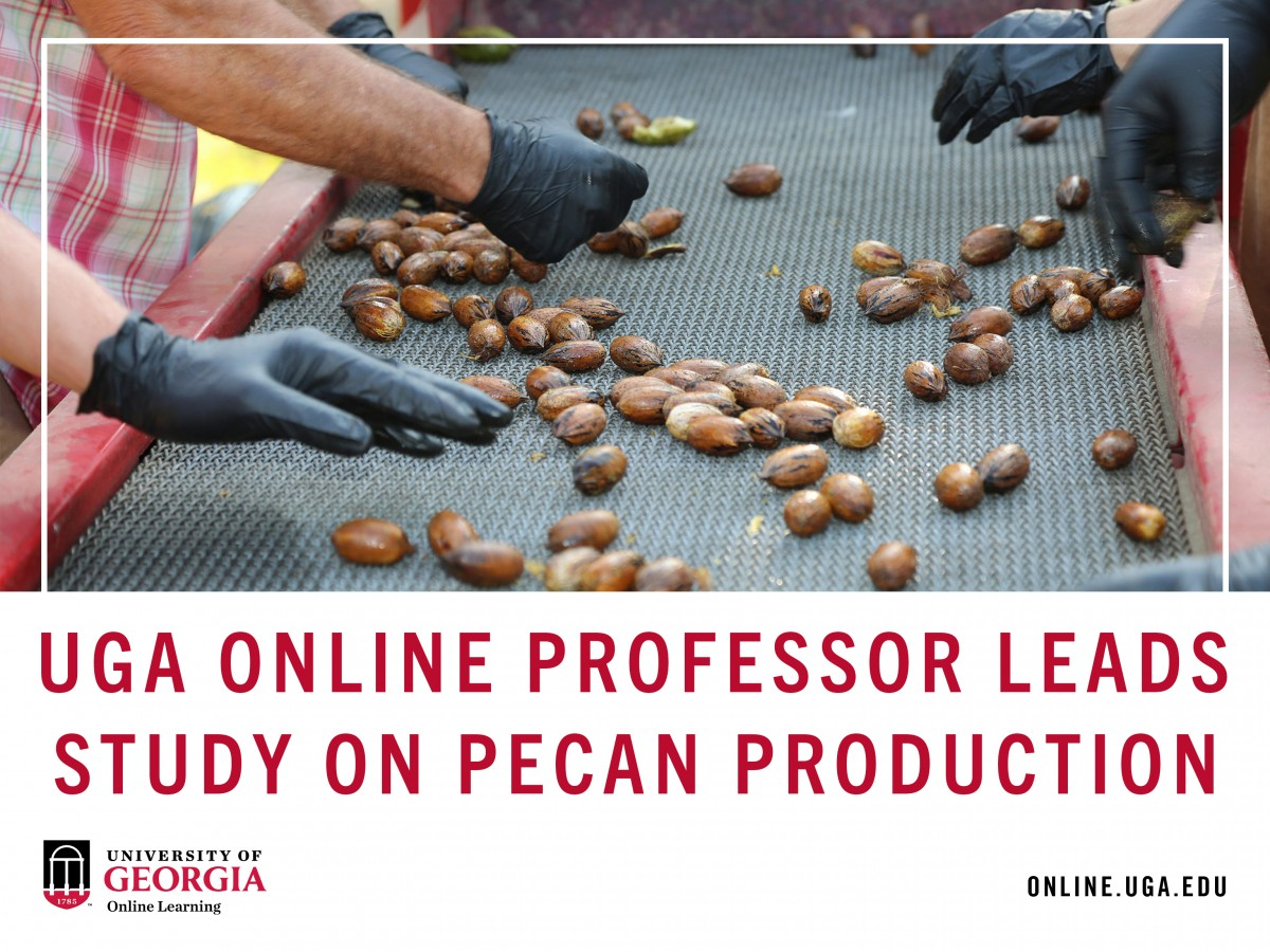 UGA online professor leads study on pecan production.